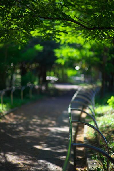 夏の終わりの散歩道