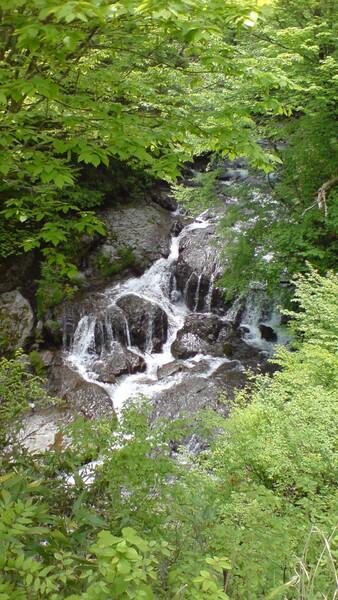 木陰から覗く滝