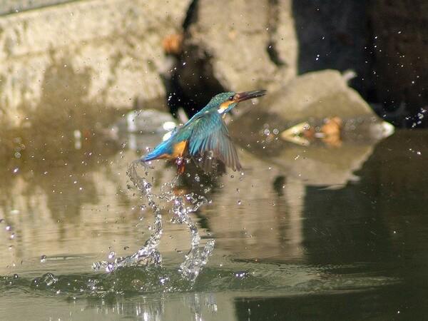 「水上がり直後、両翼のスプラッシュ!」