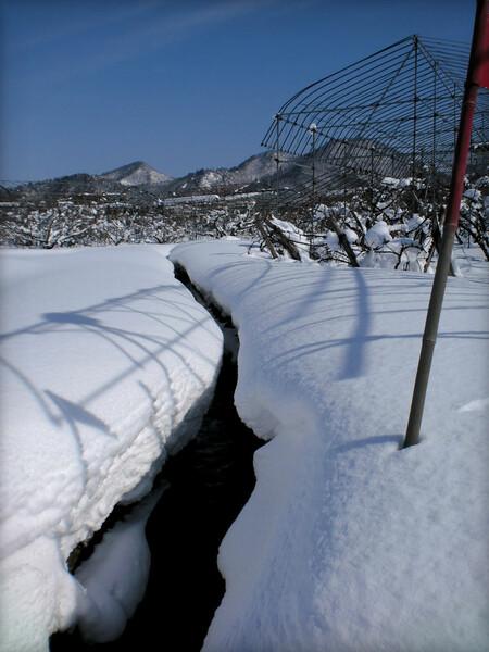 冬の小川は