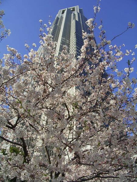 私も都会の桜を1枚