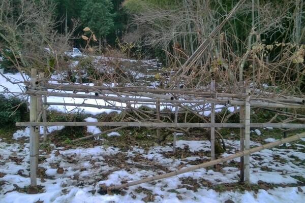 クリスマス、キウイ畑の雪景色!