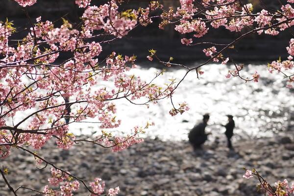 【フリー】春ものがたり