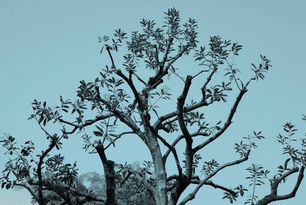 『SILVER』銀の木
