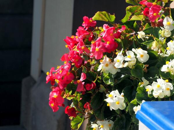 冬の花 3