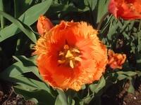 花弁がギザギザ