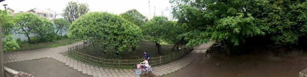 【木】新緑の頃