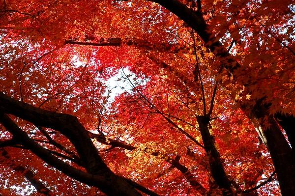 紅葉、山から里へ