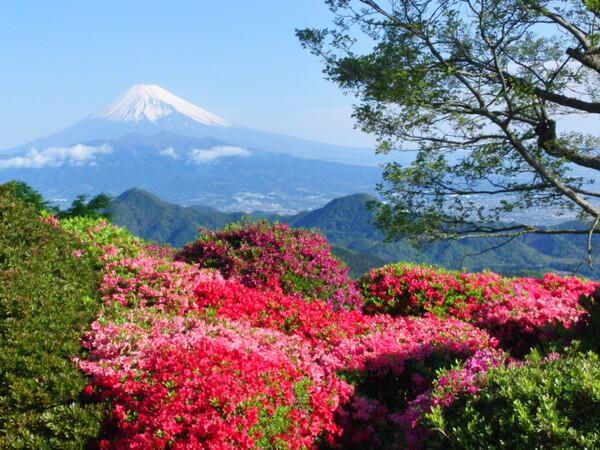 ツツジと富士の御山