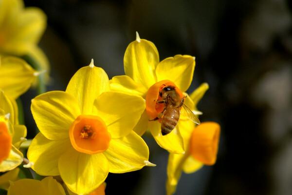 春 甘い香り!
