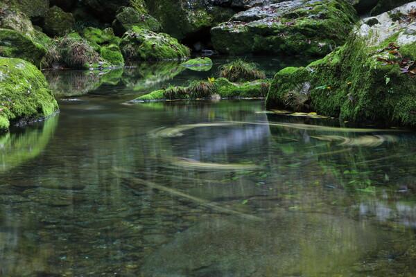 緑渓の円舞