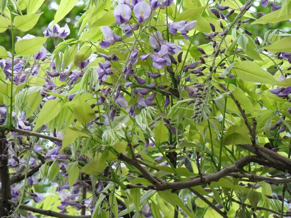 薄い緑と淡い紫