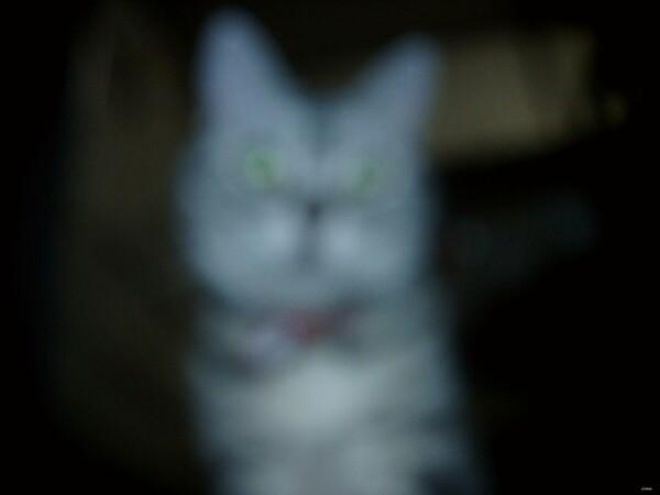 【猫】小トトロ
