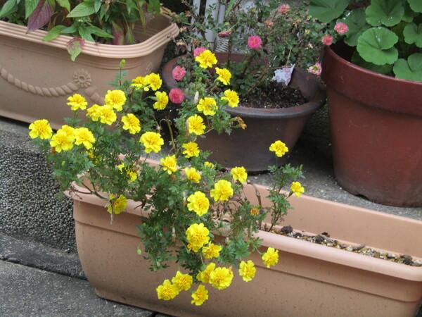 花壇は小さな宇宙かも