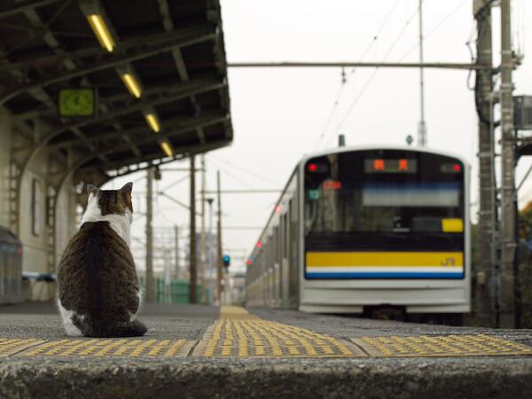 【猫】 鉄道員