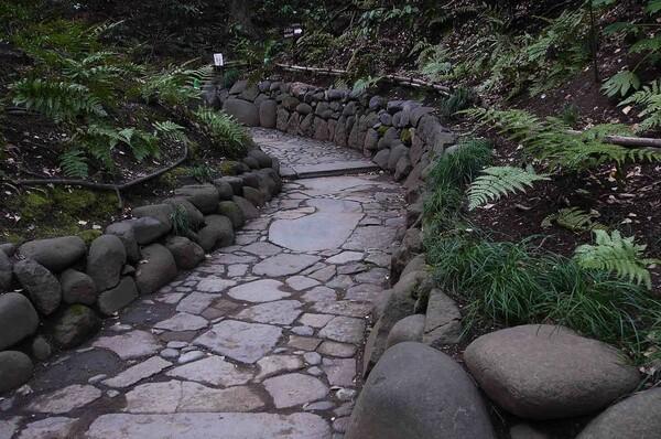 小石川後楽園の【道】