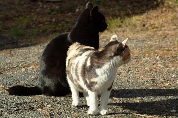 【猫】ぇええ〜。ほい!