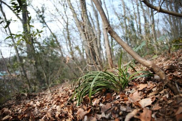 里山に春の兆し