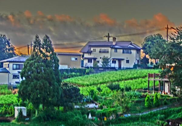 畑と家のある風景