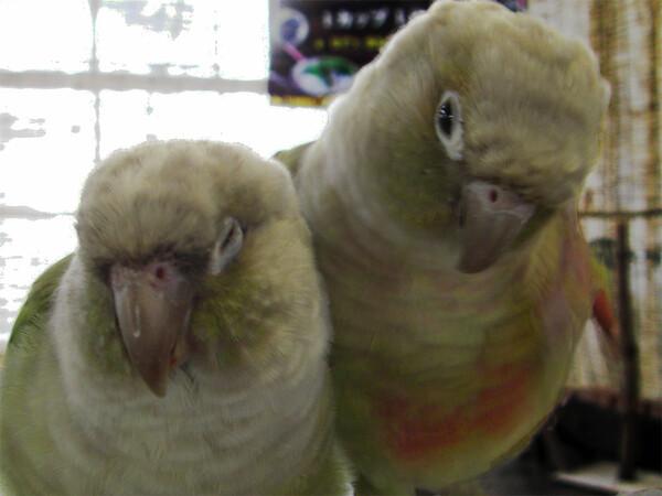 【睦】小鳥