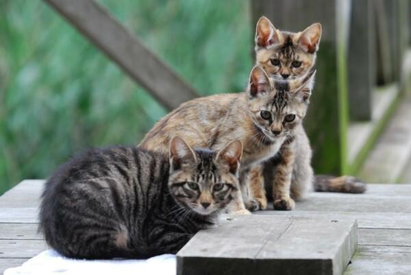 トリオ de CATS
