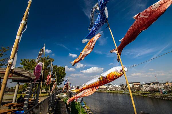 【花のある風景】鯉のぼり