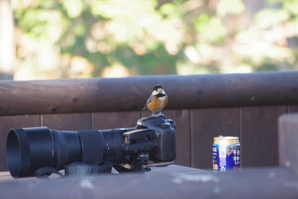 おはようカメラマンさん