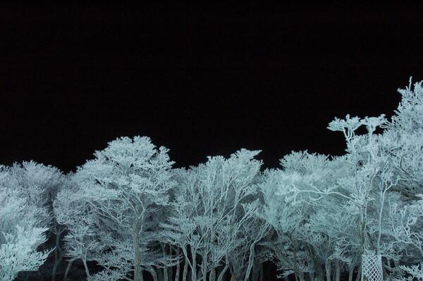 冬の夜の花
