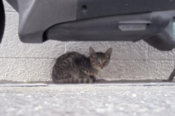 【猫】見ないでよ〜