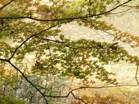 秋のきらめき