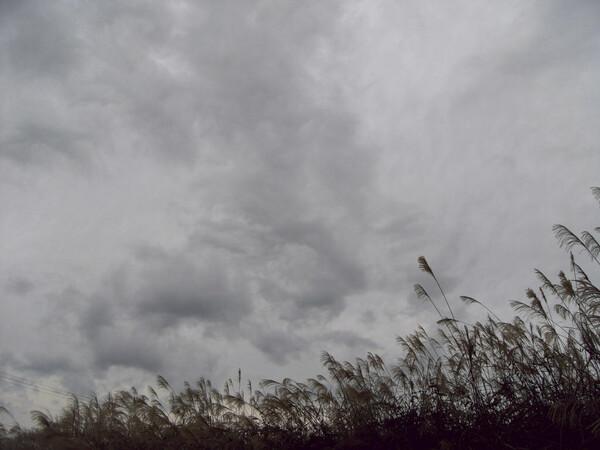 薄と曇り空