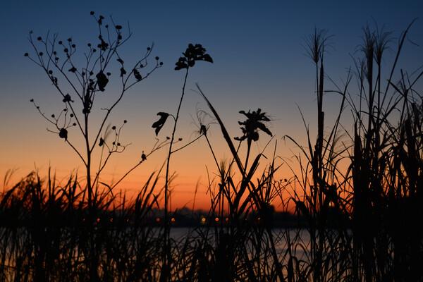 枯れ草の夜明け