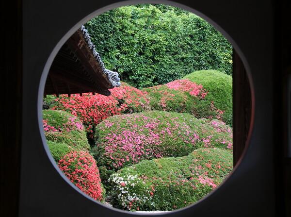 サツキ庭園の円窓