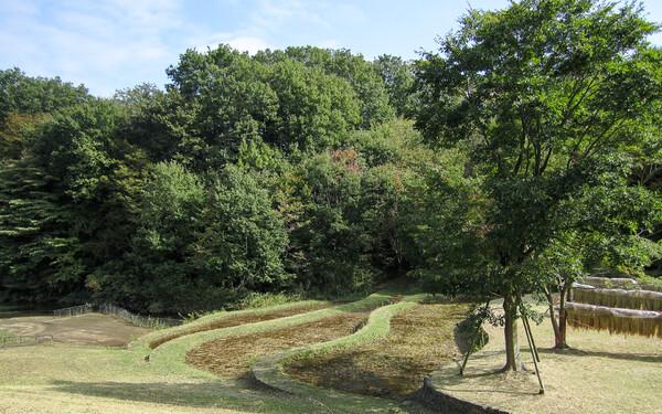 公園の棚田
