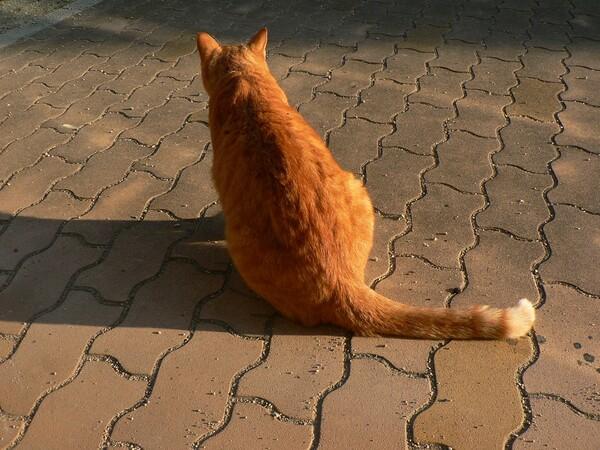 【猫】顔見知り。その1