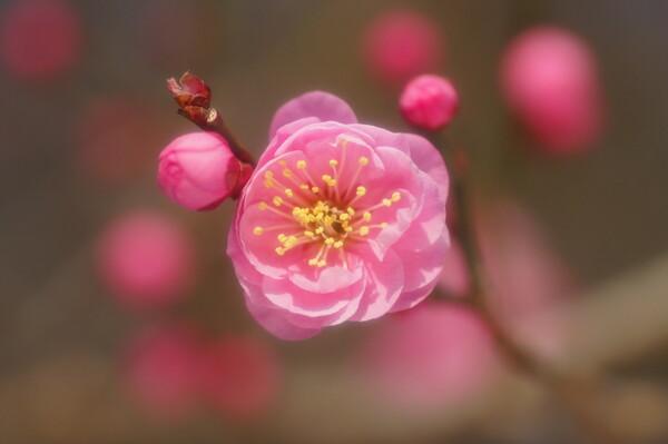 pinkest