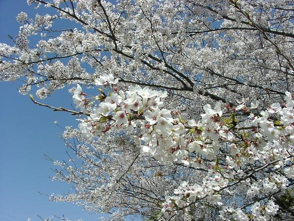 【花のある情景】ファイルNo.O-11