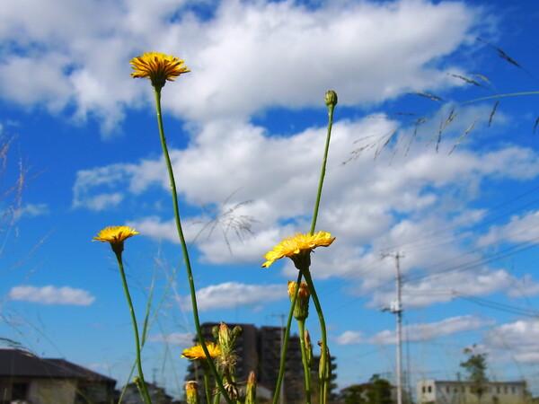 野の花と晩秋の空 - 明るさ修正②