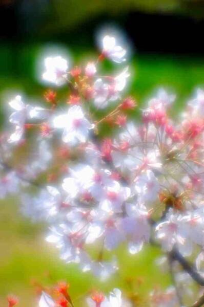 【この色 好き!】春の花#7