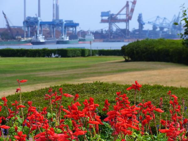 港と公園の花壇が見える風景