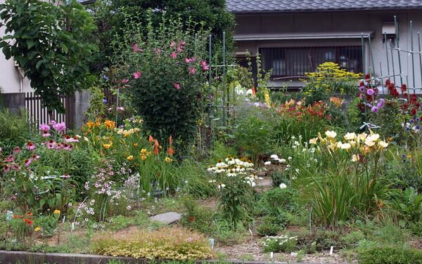 花畑で写真して楽しんでいます。