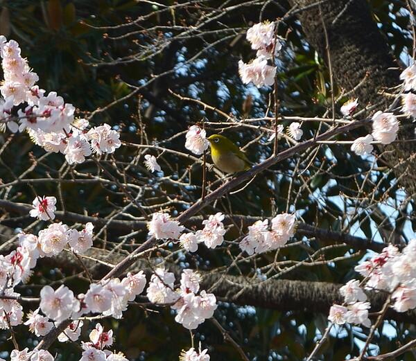 春を感じる風景