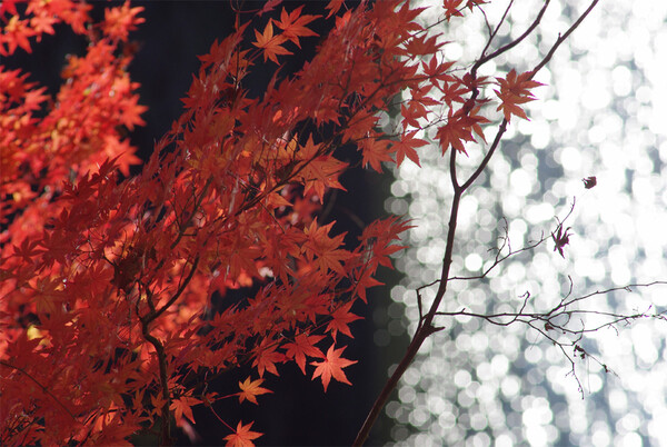 紅葉とガラス玉?
