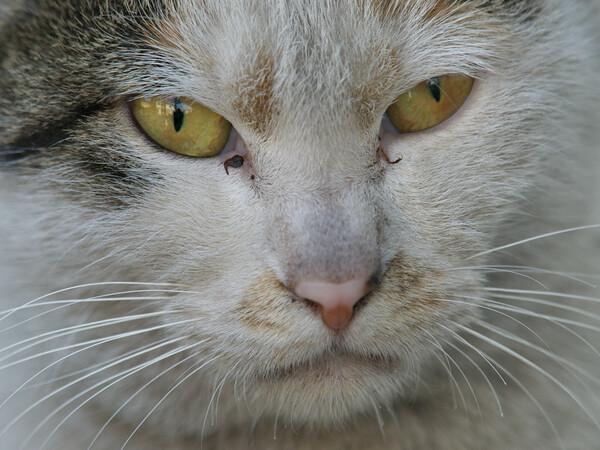 【猫】 メヂカラ