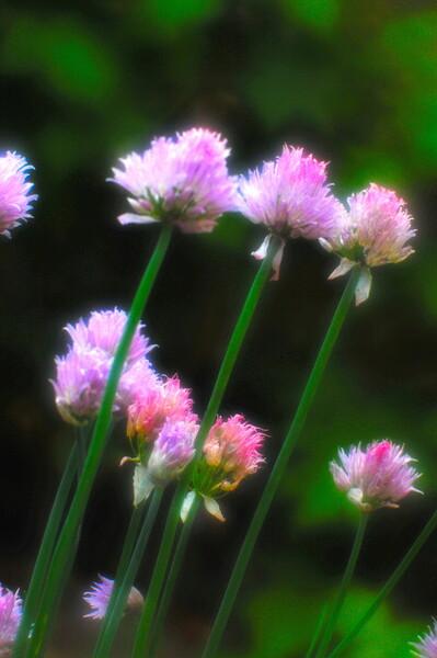 【この色 好き!】春の花#9
