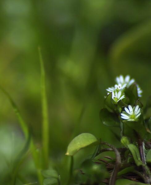 野菜畑に咲く花#2