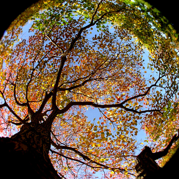 秋色に染まりて