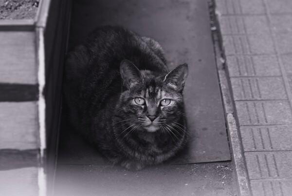 「Silver」今日の猫