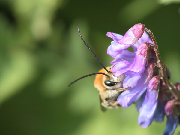 もう一つハチ