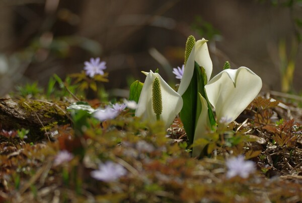 【美の国】北国の春